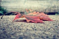 Détail de feuille d'automne Images libres de droits