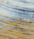 Détail de fin de coquille colorée par mer  photo libre de droits