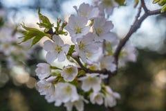Détail de fleur Photos stock