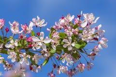 Détail de fleur Photographie stock libre de droits