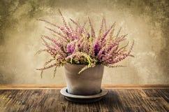 Détail de fleur de bruyère dans le pot, style de vintage Photos stock