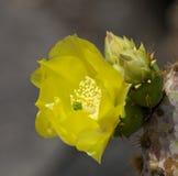 Détail 1 de fleur de cactus Photo libre de droits