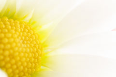 Détail de fleur de ressort Photos stock