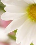 Détail de fleur de ressort Image libre de droits