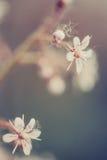 Détail de fleur rose avec des points Photo libre de droits