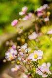 Détail de fleur rose avec le fond vert trouble Photos libres de droits