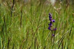 Détail de fleur sauvage sur le champ de prairie Image stock