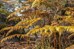 Détail de forêt d'automne Photographie stock