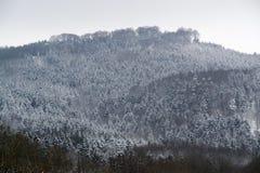 Détail de forêt de Milou images stock