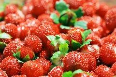 Détail de fraisier commun rouge images libres de droits