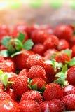 Détail de fraisier commun rouge photo stock