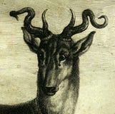 Détail de gravure à l'eau-forte principal de cerfs communs d'antiquités illustration de vecteur