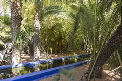 Détail de jardin de Majorelle (à la maison de Yves Saint-Laurent) Photo stock