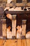 Détail de joncteur réseau de vapeur Photographie stock
