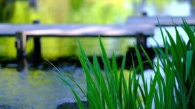Détail de l'eau d'écoulements sur le fond de lac banque de vidéos
