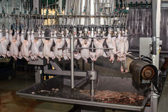 Détail de l'industrie alimentaire avec la transformation de la viande de volaille photos libres de droits
