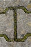 Détail de la formule qui a créé la mousse sur le trottoir Photo libre de droits