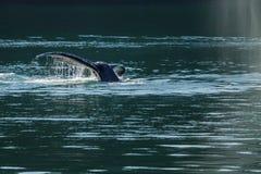 Détail de la queue de la baleine de bosse (novaeangliae de Megaptera) Photographie stock libre de droits