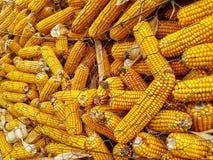 Détail de maïs photographie stock libre de droits