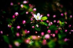 Détail de nature au printemps, fleurissant images libres de droits
