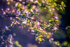 Détail de nature au printemps images libres de droits
