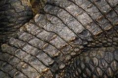 Détail de peau de crocodile Photos libres de droits