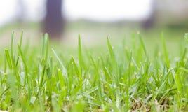 Détail de pelouse Photo libre de droits