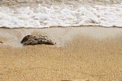Détail de plage ocre jaune avec la vague de mer L'eau est frangée photo stock