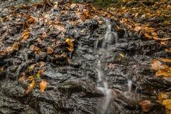 Détail de plan rapproché de l'eau entrant doucement au-dessus des roches dans la forêt dans l'automne Images libres de droits