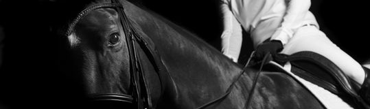 Détail de portrait de cheval Photographie stock libre de droits