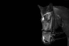 Détail de portrait de cheval Photos libres de droits