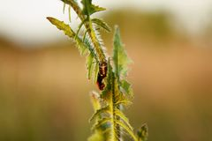 Détail de scarabée coloré Images stock