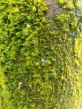 Détail de texture d'arbre moussu photos stock