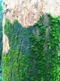 Détail de texture d'arbre moussu photographie stock libre de droits