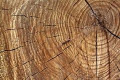 Détail des anneaux d'arbre Image stock