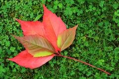 Détail des feuilles colorées de bel automne Images libres de droits