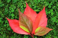 Détail des feuilles colorées de bel automne Image libre de droits