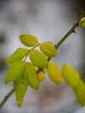 Détail des feuilles vertes Photo libre de droits