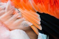 Détail des plumes d'un flamant photos libres de droits
