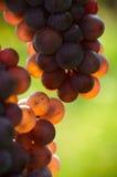 Détail des raisins Images libres de droits