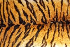 Détail des rayures de tigre sur le cuir photographie stock
