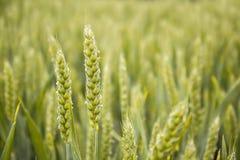 Détail des textures vertes organiques Photo stock