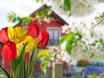 Détail des tulipes avec une maison photographie stock
