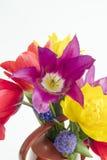 Détail du groupe de tulipes colorées et de muscari placés sur une eau Images libres de droits
