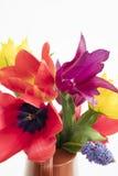 Détail du groupe de tulipes colorées et de muscari placés sur une eau Image stock