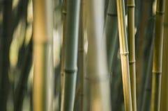 Détail en bambou vert et brun Images stock