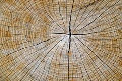 Détail en bois Photographie stock libre de droits