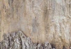 Détail en bois de tronc Image stock