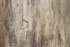 Détail en bois de tronc Photographie stock
