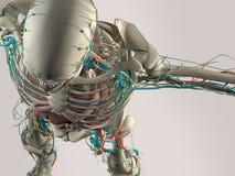 Détail humain d'anatomie de crâne et d'épaule Muscle, artères Sur le fond simple de studio Détail humain d'anatomie de crâne et d Photo stock